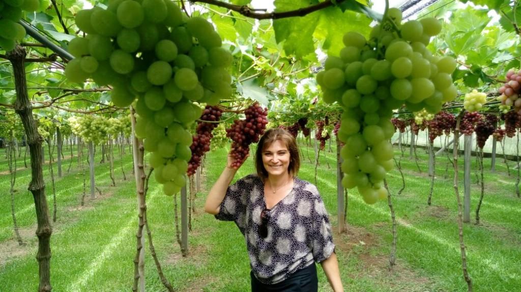 Receitas com UVA: Cuca de Uva e Geleia de Uva!